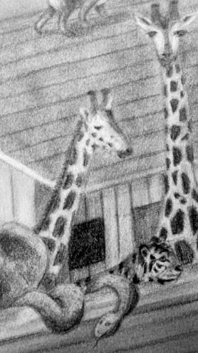 Giraffe detail