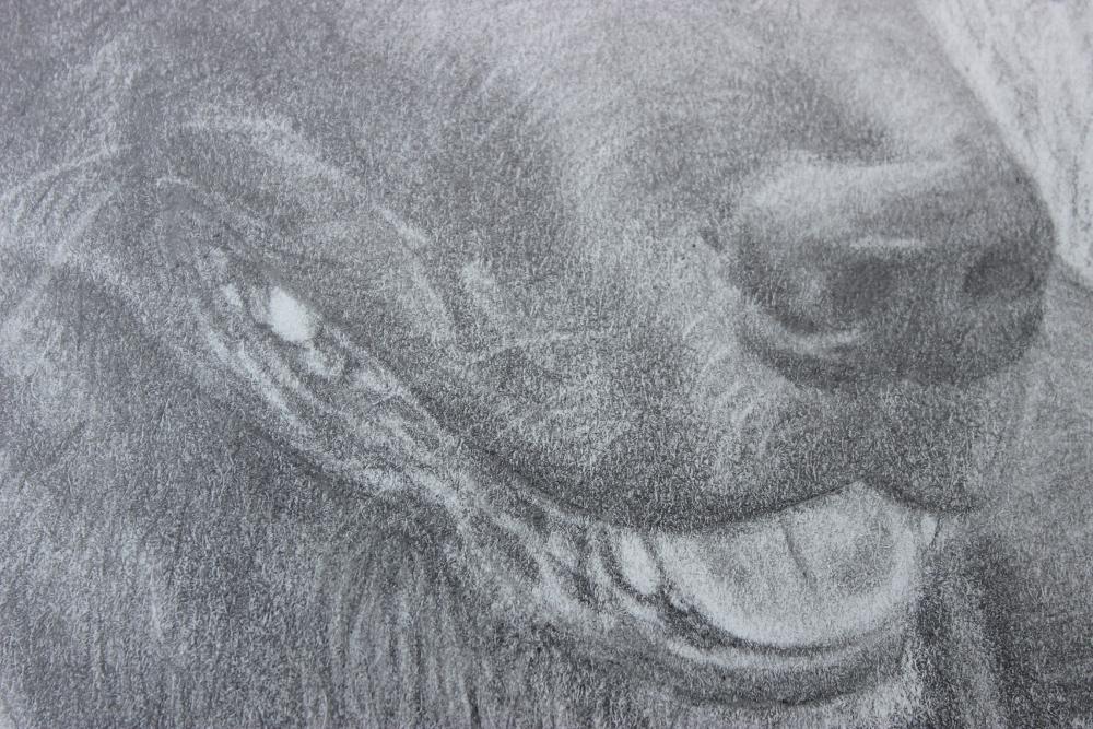 Milo nose