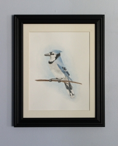 Blue Jay 8.5
