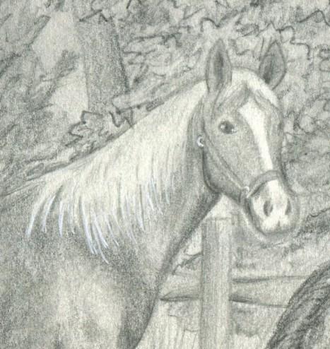 horse-1-edited