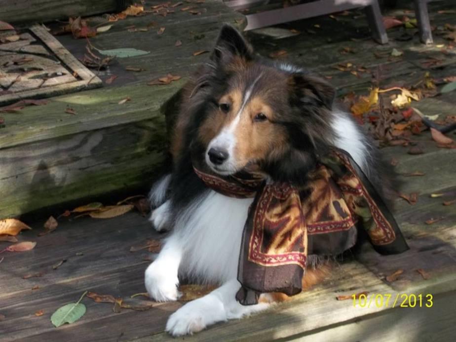 lassie-2