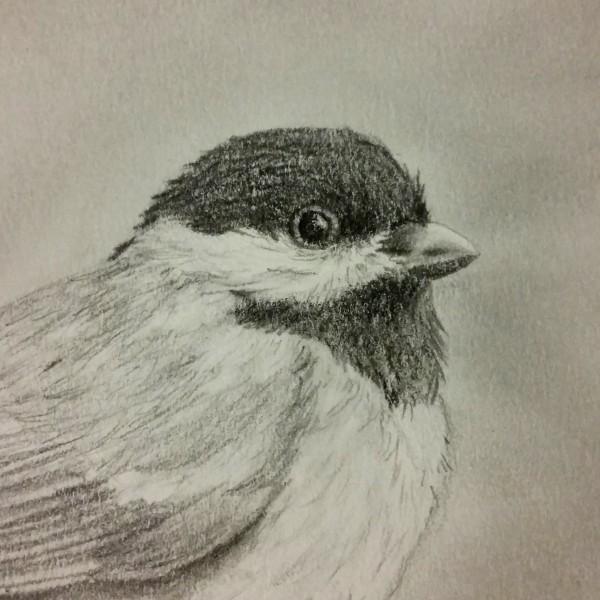 Bird face (1)