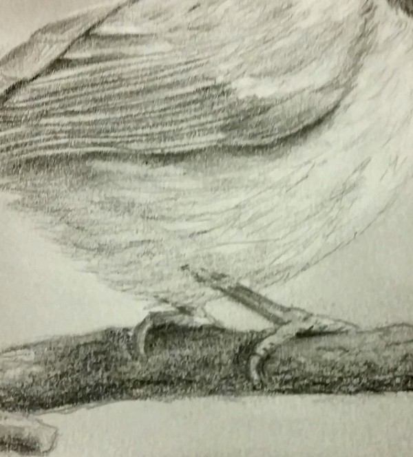 Bird feet (1)