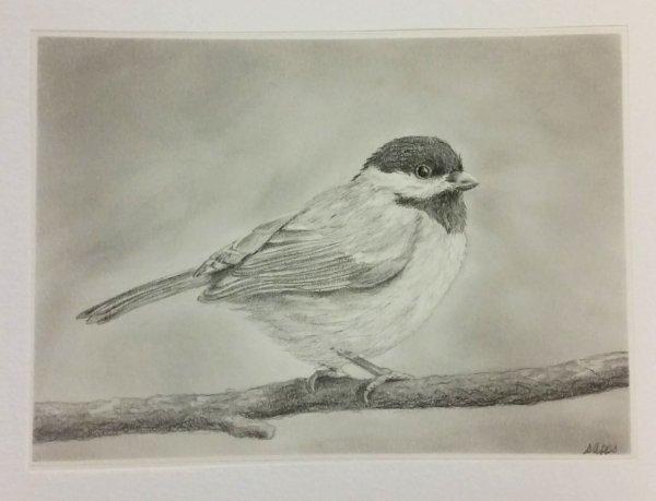 Bird full (1)