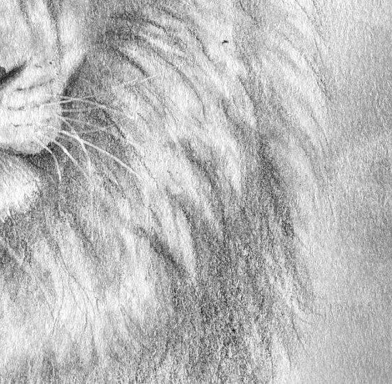 lion detail 2