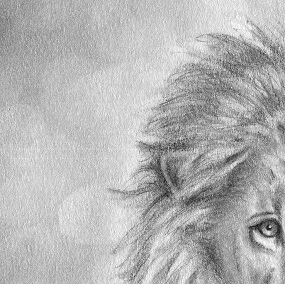 lion detail