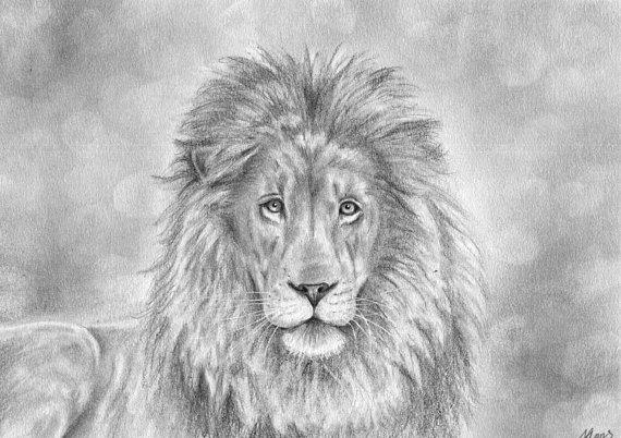 lion full