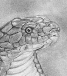 snake detail
